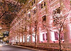 桜ライトアップ.jpg